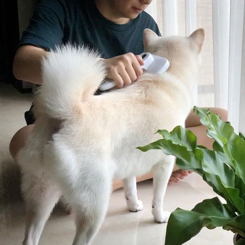 LINGO|一鍵清潔 不鏽鋼寵物刷毛梳