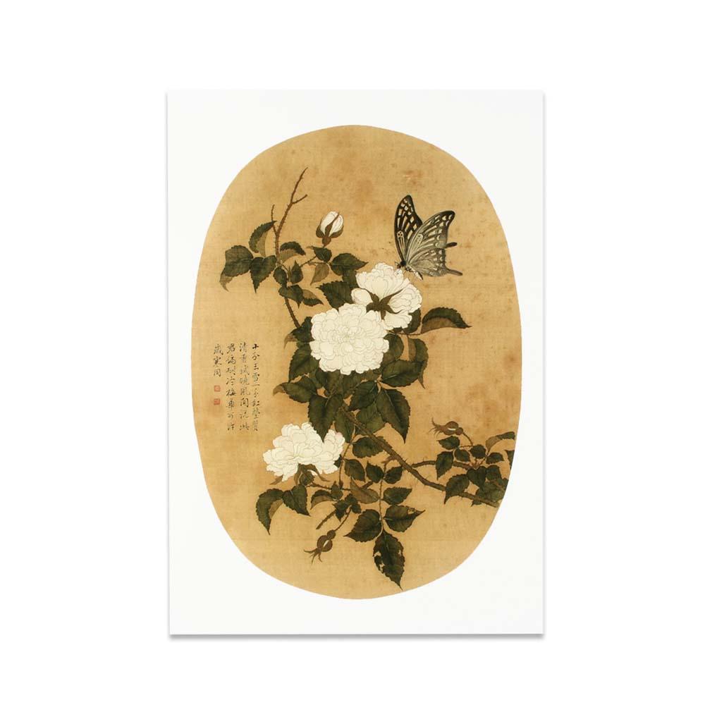故宮精品 | 圖卡-畫花卉白薔薇