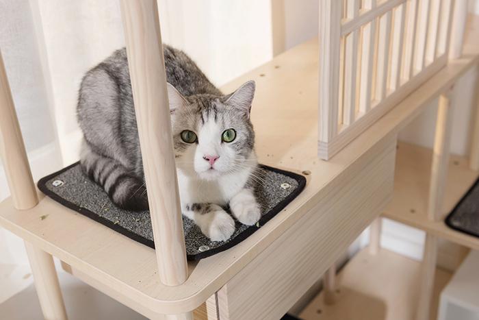 (複製)拍拍 跳箱窩專用貓抓布